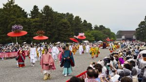 festival hollyhock