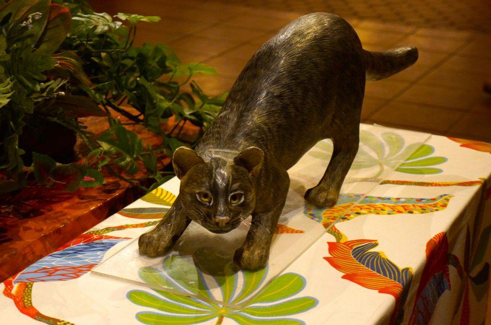 Iriomote's yamenko wildcat