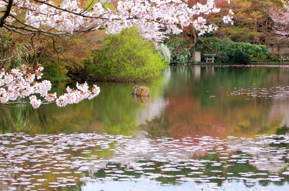 Kyoto Secret Garden Tour
