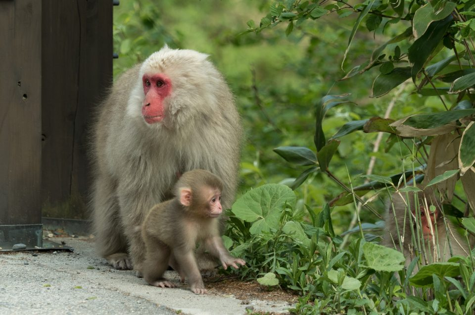 Encounters with monkeys